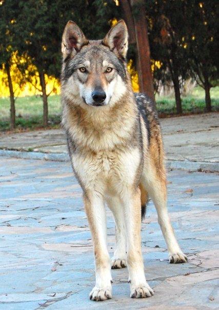 http://dl.wolfdog.org/g/12/121204.jpg