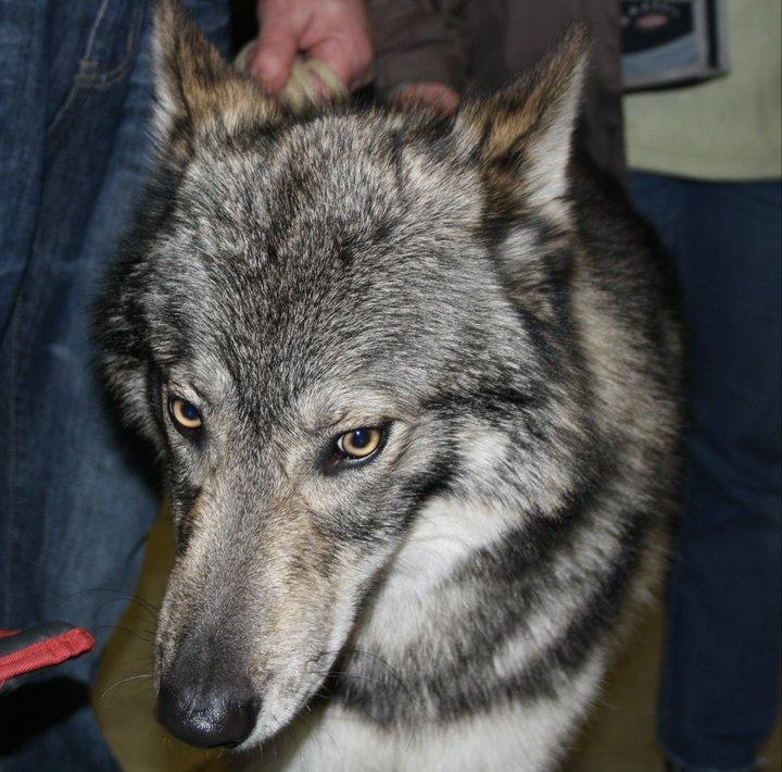http://dl.wolfdog.org/g/16/162671.jpg