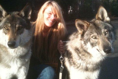 http://dl.wolfdog.org/g/16/162672.jpg