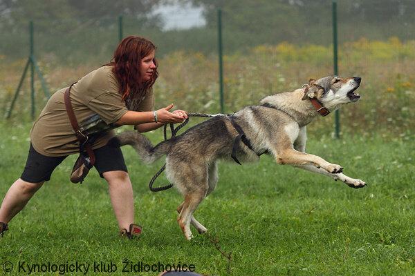 http://dl.wolfdog.org/g/16/169747.jpg