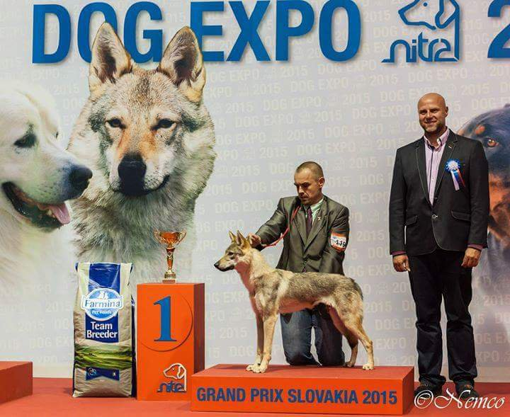 Grand Prix National Breed - Winners of the International Dog Show «Grand Prix Slovakia», Nitra, 06 June 2015 (Saturday)