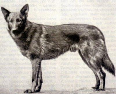 Image result for hektor von schwaben