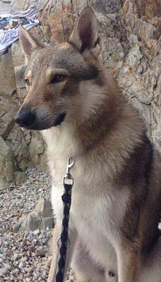 http://dl.wolfdog.org/pics/dbase/25543.jpg
